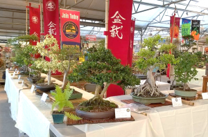 Picture of bonsai trees on display at Great Big Green House